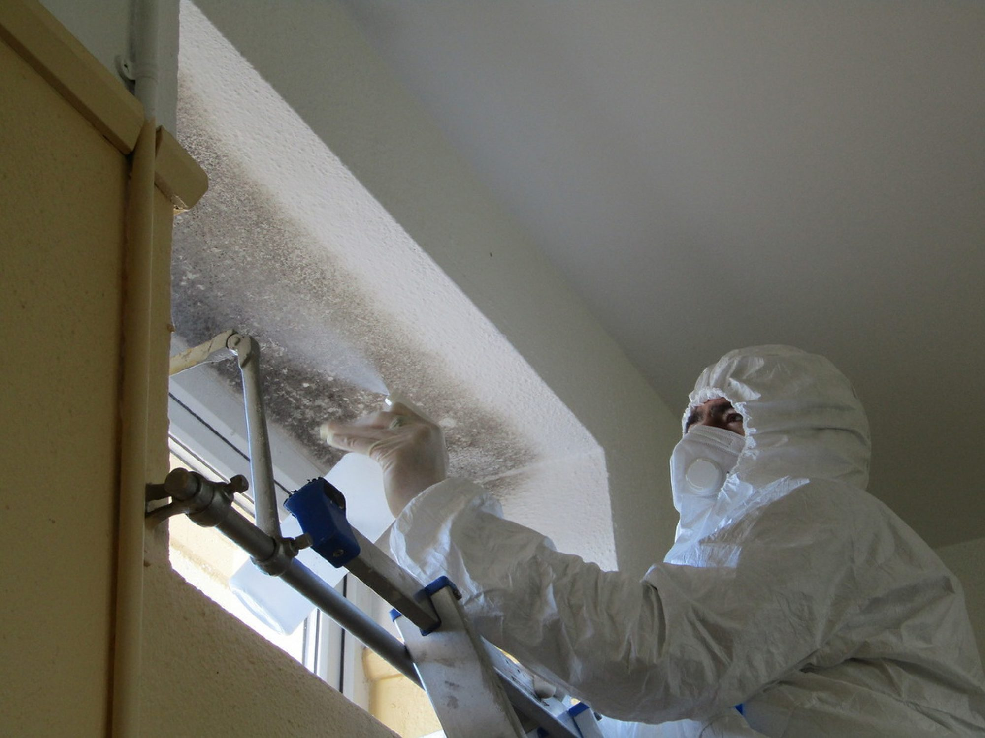 Mould infected school